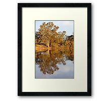 River Murray Reflections Late Afternoon Framed Print