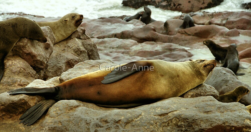 Lazy! South African Fur Seal by Carole-Anne
