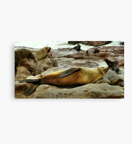 Lazy! South African Fur Seal Canvas Print