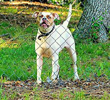 The Neighborhood Watchdog Certainly Does a Good Job by Scott Mitchell