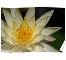Waves of Zen Poster