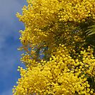 Black Wattle by Eve Parry