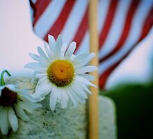 Daisies for a soldier... by Brian J Castro