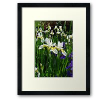 Irises of Many Names Framed Print