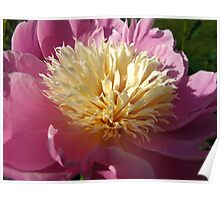 Happy June 1st! Peony Time Poster