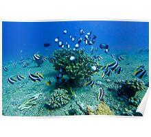 Kauai Reef Scene Poster