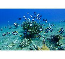 Kauai Reef Scene Photographic Print