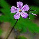 little flower by jean-jean