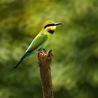 Rainbow Bee-eater by Tanya Rossi