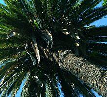 Palm Tree by cadellin