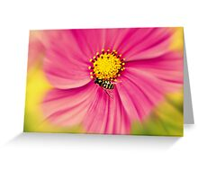 Hoverfly in the Pink Greeting Card