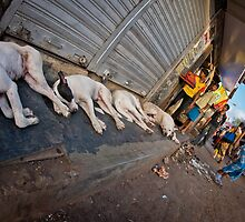 Slum dogs Mumbai by Heather Buckley