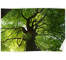 Branching off Poster