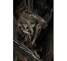 Raw Bog Wood Knot Image Photographic Print