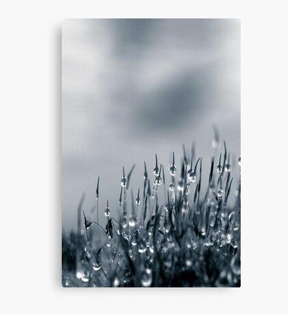 Drops of nature Canvas Print