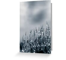 Drops of nature Greeting Card