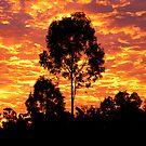 Sensational Sunrise by Cathie Trimble