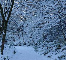 Winter Wonderland by esharp