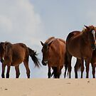 Four Wild Mustangs by Laurel Talabere