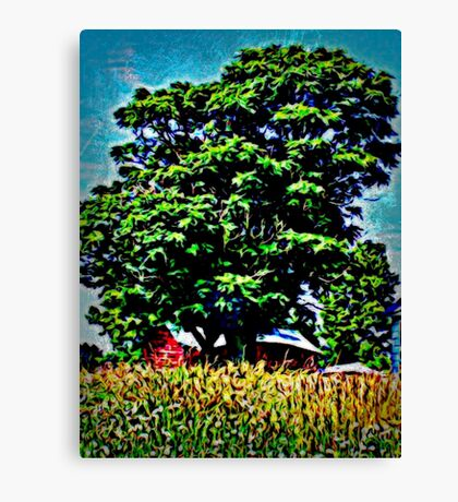 Enormous Oak Tree  Canvas Print