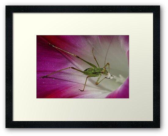 Tiny Grasshopper on Mornig Glory by marens