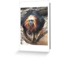 Golden Headed Lion Tamarin Greeting Card
