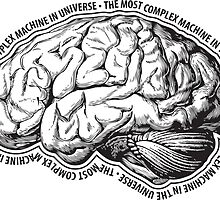 Brain. The Most Complex Machine in the Universe. by n21b