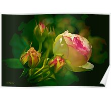 Fall Rose and Buds Poster