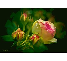 Fall Rose and Buds Photographic Print