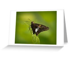 Cantigny Red Admiral Greeting Card