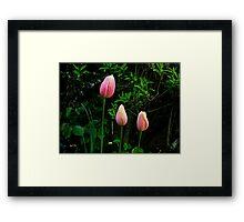 Tulips pink Framed Print