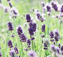 Lavender Afternoons by Olive Ndungutse