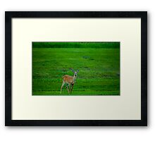 Meadow Buck Framed Print