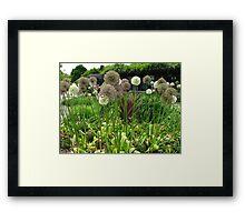 Pom Pom Garden Framed Print