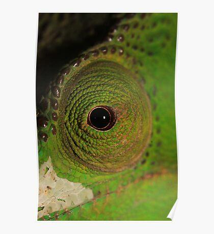 Green Eye Poster