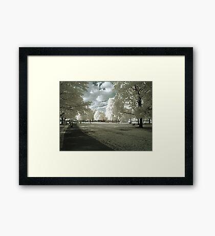 Stilton On Grass Framed Print