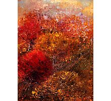 Autumn Orchard Photographic Print