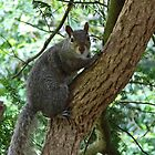 Grey Squirrel (oil painting effect) by shalisa