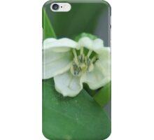 Flowering Pepper Plant iPhone Case/Skin