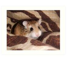 Cheese the Roborovski Hamster Art Print