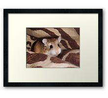 Cheese the Roborovski Hamster Framed Print