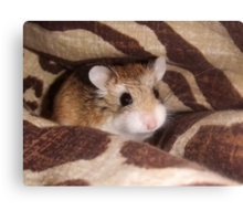 Cheese the Roborovski Hamster Canvas Print