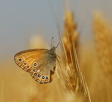flower on the ear of wheat by davvi