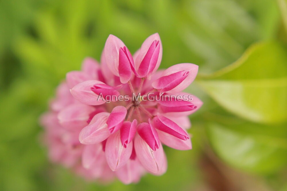 Lupin abstract by Agnes McGuinness