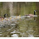 Goose Family by Nativeexpress