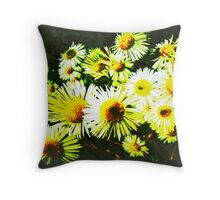 New England Asters in a Different Light Throw Pillow
