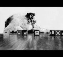 My little dog -- a heartbeat at my feet. by Laura-Lise Wong