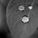 Droplets by MJD Photography  Portraits and Abandoned Ruins