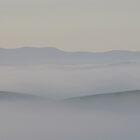 Lone Bovine in the Mist by geoffgrattan
