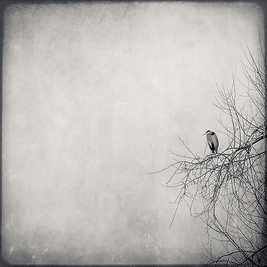 All Alone Again by Annie Lemay  Photography